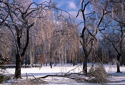 Park in Ice