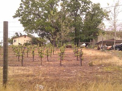 Amador County Wine Weekend