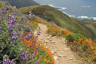 Wildflowers in Garrapata State Park