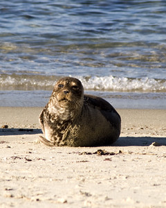 California-Seal-2