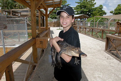 Holding Alligator