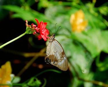 Butterfly sucking flower