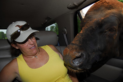 Jode and the steer