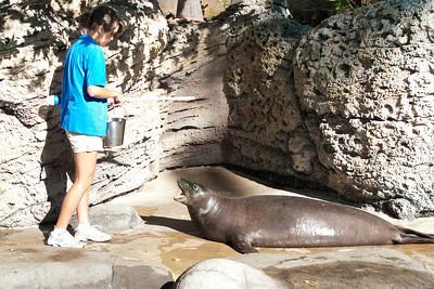 Hawaiian Monk Seals at Honolulu Aquarium