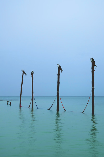 Birds posting up before the tourists arrive. Isla Holbox. June 2018