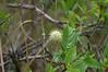 Kirby Storter Roadside Park<br /> <br /> Big Cypress Swamp