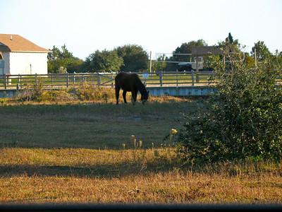 Horses near Carolla, NC