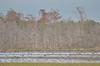Alligator River NWR, NC