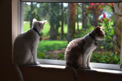 The Cats in Estero