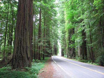 Humbolt Redwoods State Park