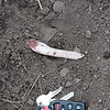 Deer bone from recent mountain lion kill, Towhee Trail, South Boulder