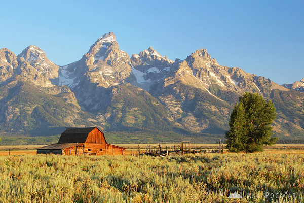 Grand Tetons with a barn from Mormon Row at sunrise