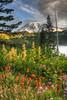 Mt. Rainier after sunrise