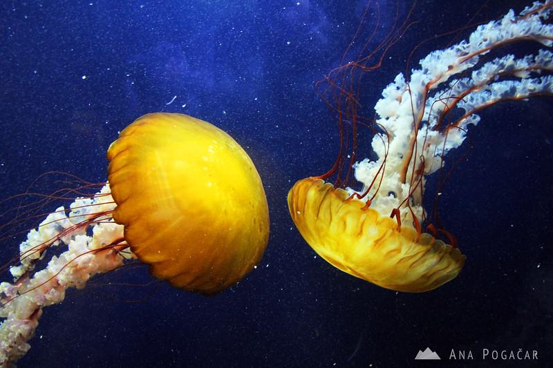 San Francisco Aquarium