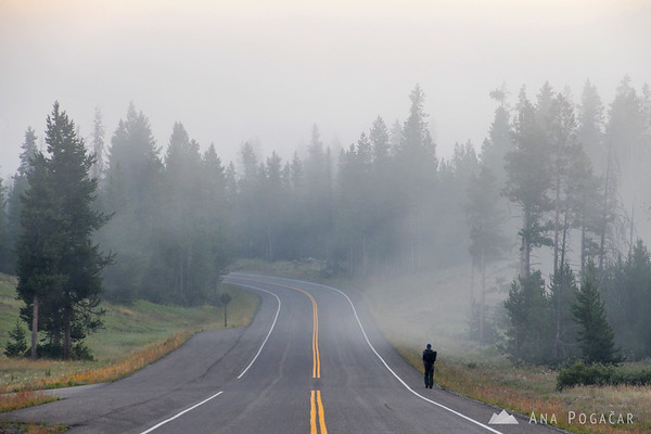 Foggy morning on the way to Yellowstone