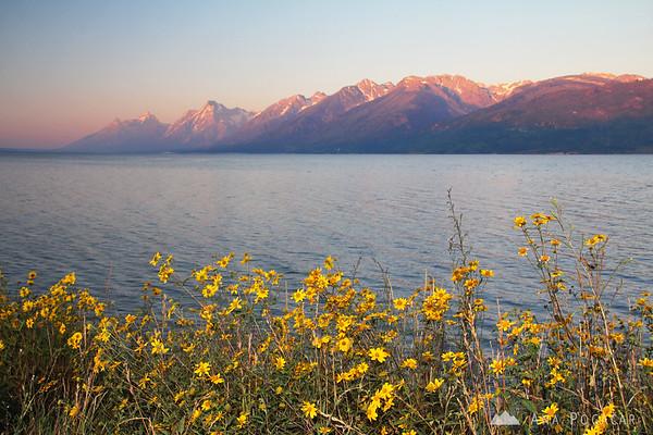 Jackson Lake at sunrise