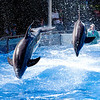 Seaworld - The dolphins rock
