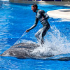 Dolphin riding