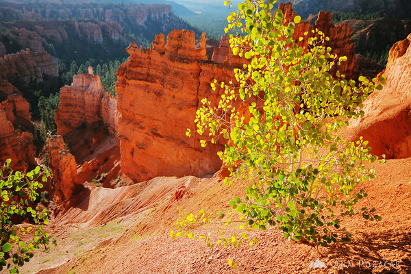 The canyon was ablaze in the morning light; Bryce Canyon NP