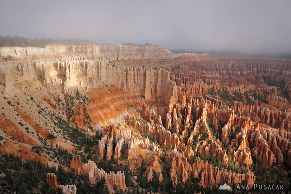Foggy morning, Bryce Canyon NP