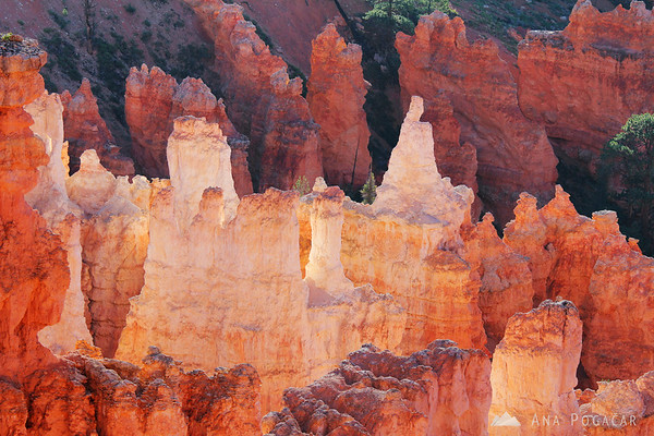 The hoodoos were ablaze in the morning light; Bryce Canyon NP