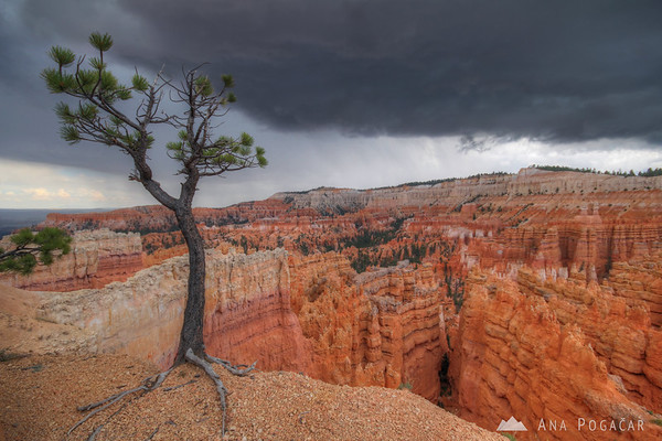 Before a storm, Bryce Canyon NP