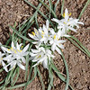 "Star Lilly <a href=""http://coloradowildflowers.org/flower_details.php?flowerID=12Boulder"">http://coloradowildflowers.org/flower_details.php?flowerID=12Boulder</a> Newcomers Club Hike"