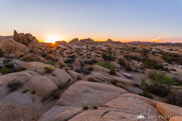 Sunset in Joshua Tree NP