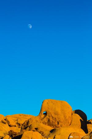 Elephant Rock, Joshua Tree NP