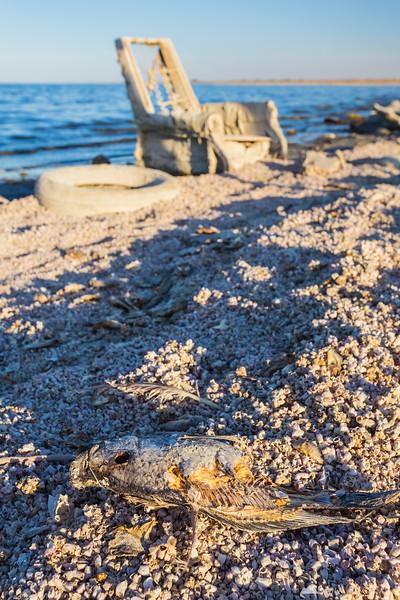 Fish and a broken chair at Salton Sea Beach