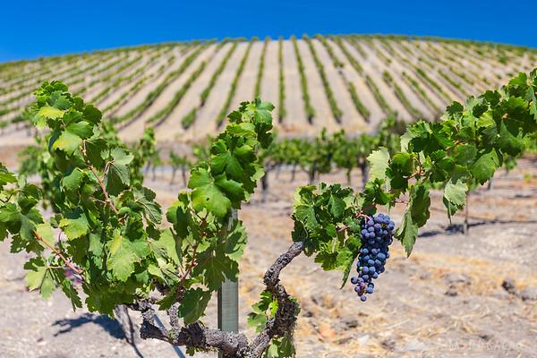 Wine country around Paso Robles