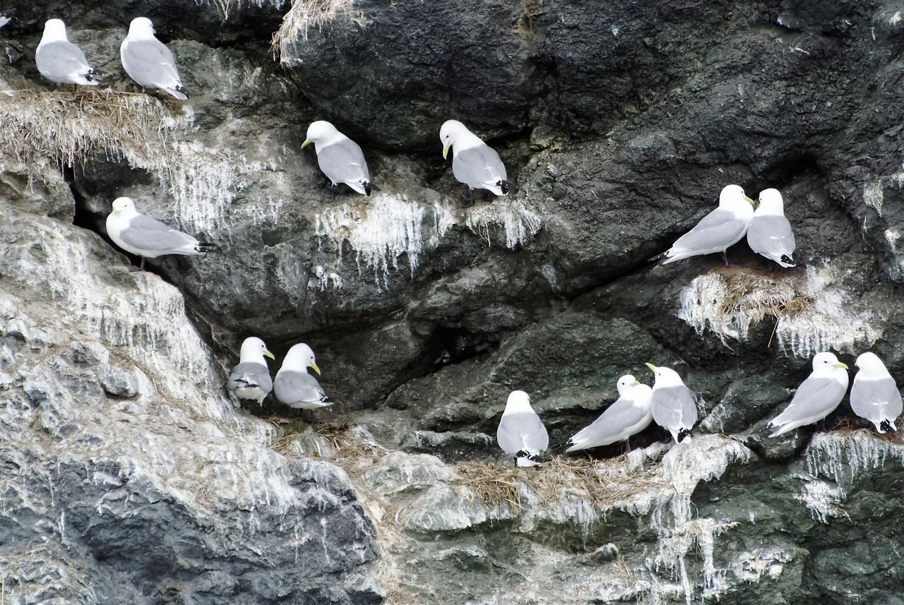 Gull Island in Kachemak Bay
