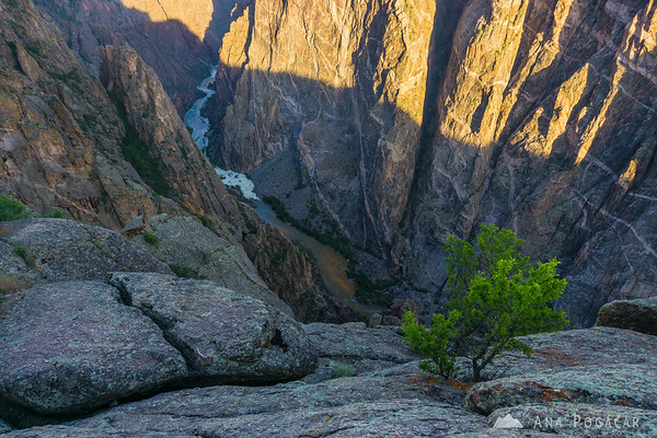 Early morning at the Painted Wall viewpoint, Black Canyon of the Gunnison, Colorado