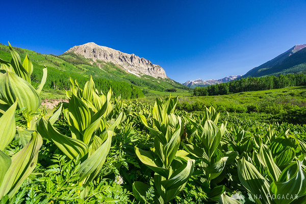 Views from Gothic Road near Crested Butte, Colorado