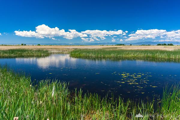 Wildlife Refuge near Alamosa, Colorado