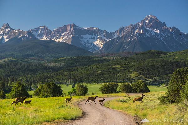 Elk encounter, San Juan Mountains, Colorado