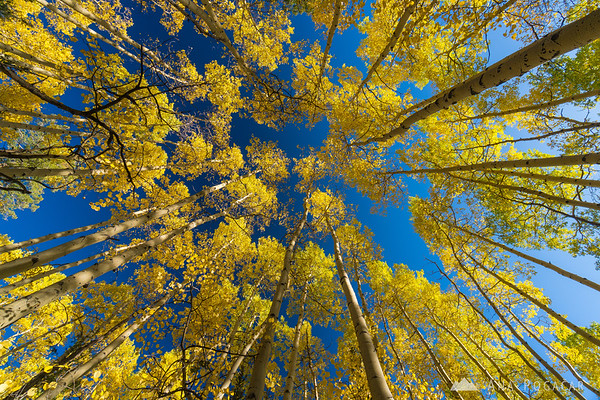 Aspens on Last Dollar Road