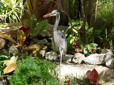 Hegre i Marie Selby garden