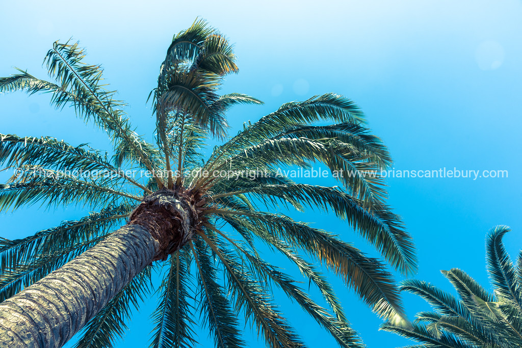 Tropical palms against blue sky.