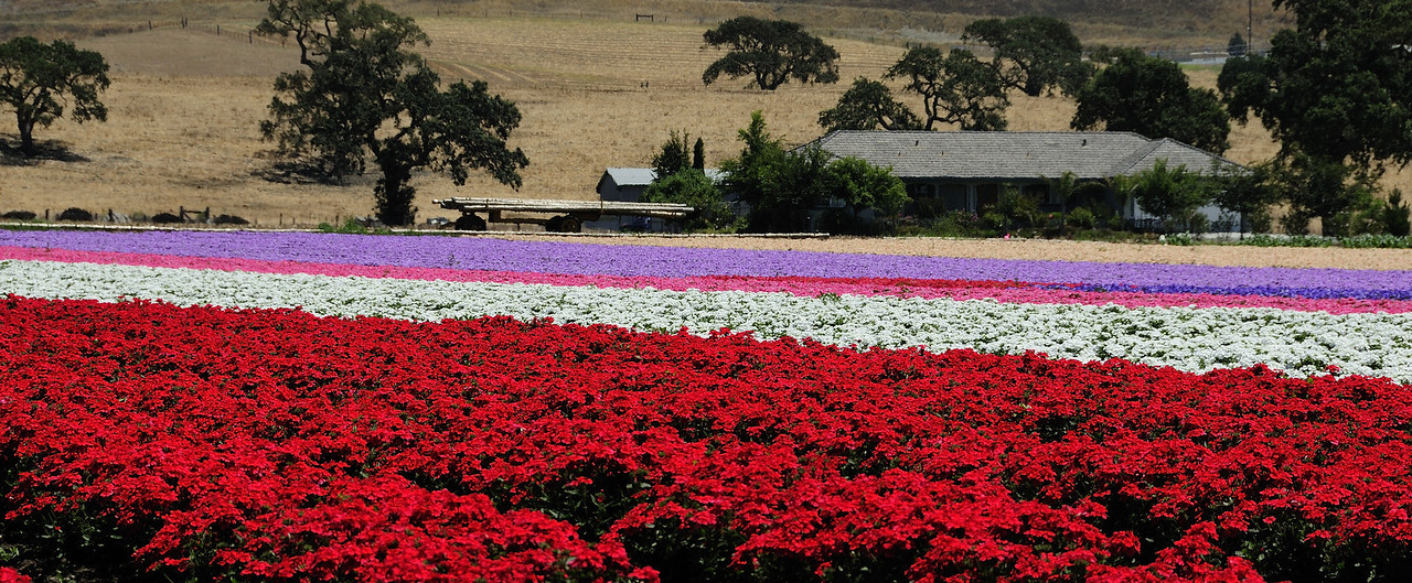 Floral Saturation