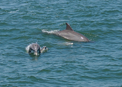 Dolphin and baby