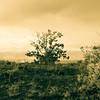 Vintage image tree in volcanic landscape.