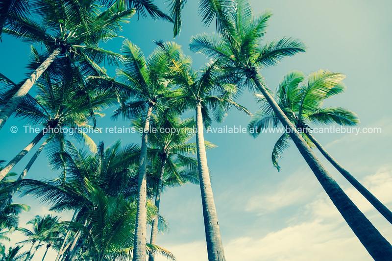 Retro palm trees image.