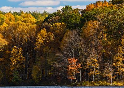 Contrast, Seneca Creek State Park