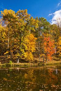 Autumn leaves, Seneca Creek State Park