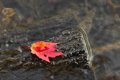 Red, Seneca Creek State Park