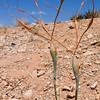 Unusual Desert succulent.