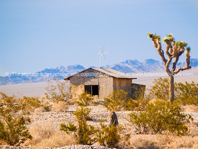 Old shed and Joshua tree, Red Rock Canyon