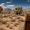 Expansive landscapes and Joshua Trees of Red Rock Canyon