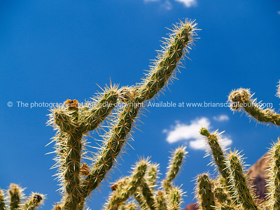 Cactus, Red Rock Canyon